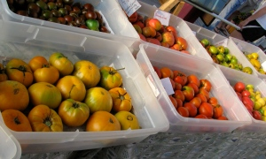 Colorful tomatoes in the market