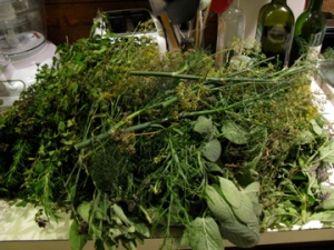 The herb tangle