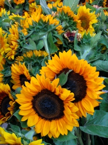 Sunflowers at the North Market
