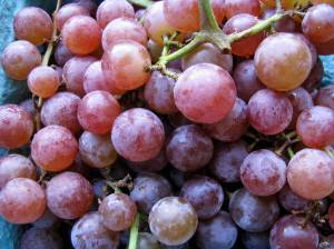 Reliance grapes