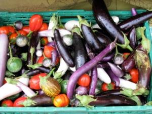 a riot of eggplants