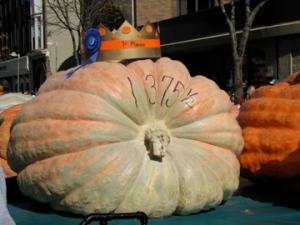 The winning pumpkin