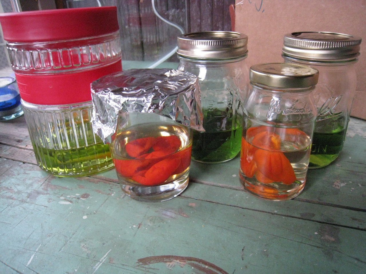 bear's chili infusions