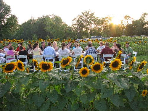 slow food columbus girasole
